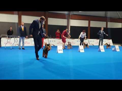 European dog show 2018, Welsh terrier BOB