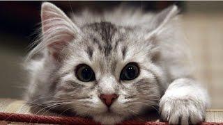 ●ПРИКОЛЫ С КОШКАМИ● Видео приколы про кошек, Приколы про кошек до слез видео, Приколы про кошек 2017