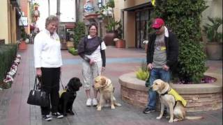 Puppy In Training Tv - Ep11 - Guide Dog Pups At The Movies