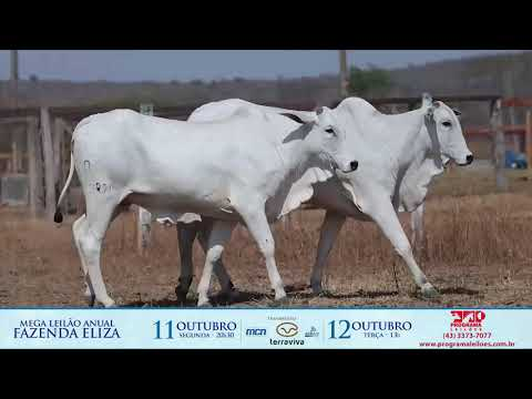 LOTE 158