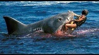 HOMBRE LUCHA CONTRA TIBURON. Un superheroe de las costas australianas