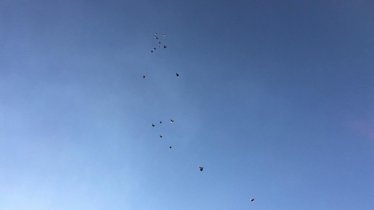 николаевские голуби ютуб задумки, одобренные