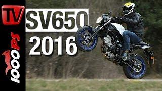 Suzuki SV 650 Test 2016 | Fazit, Preis, Action (English subtitles)(Testfahrt mit dem brandneuen Einsteiger-Nakedbike der Suzuki SV650 2016. Wer beim flüchtigen Betrachten der neuen SV650 meint, die Vorgängerin der ..., 2016-02-29T16:07:07.000Z)