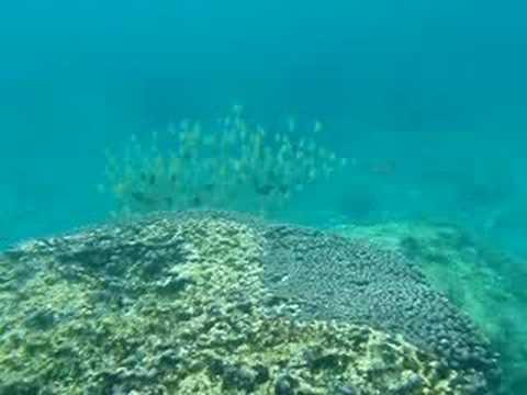 下地島・中の島の魚の群れ。まさに大きな魚の姿?