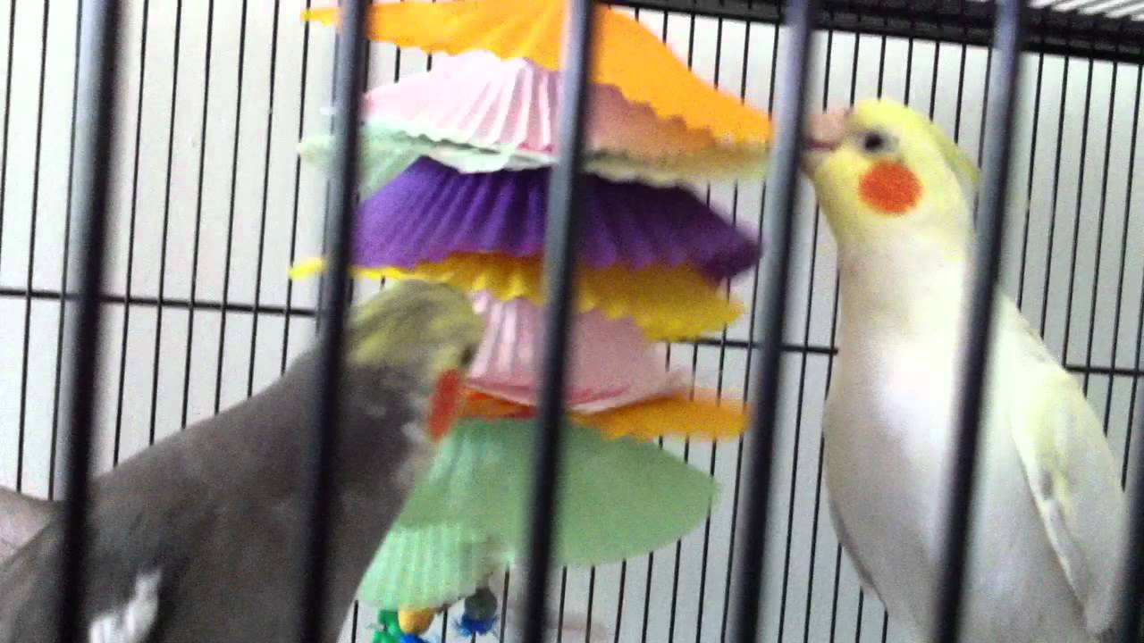 Image result for toys bird cockatiels