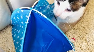 FUNNY CAT Tries To Fit Into DOLL TENT