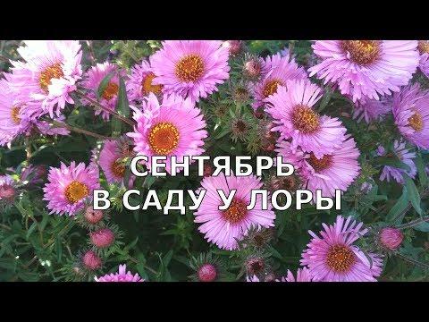 Садовые цветы сентября. Мой осенний сад. В саду у Лоры.