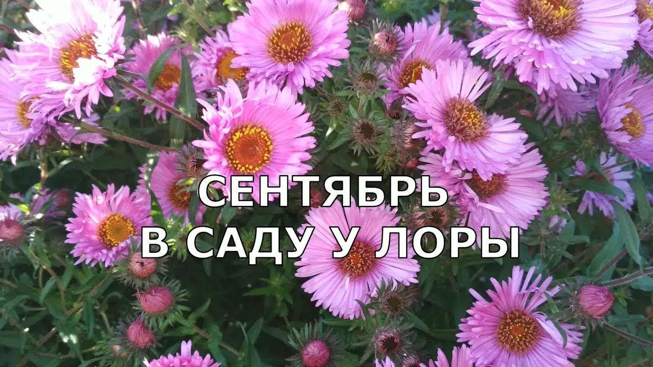 Осенний сад цветы