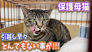 保護母猫家猫化 引っ越して早々とんでもない事が!!!