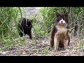 【地域猫】一段とボロボロなキューと相変わらず人見知りなヤマト。【魚くれくれ野良猫】