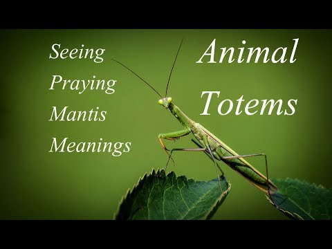 The Meaning Of Seeing A Praying Mantis Meanings And Totems Youtube
