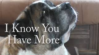 GIANT SAINT BERNARD Get's A Treat, Watch What HAPPENS! 225 lb DOG