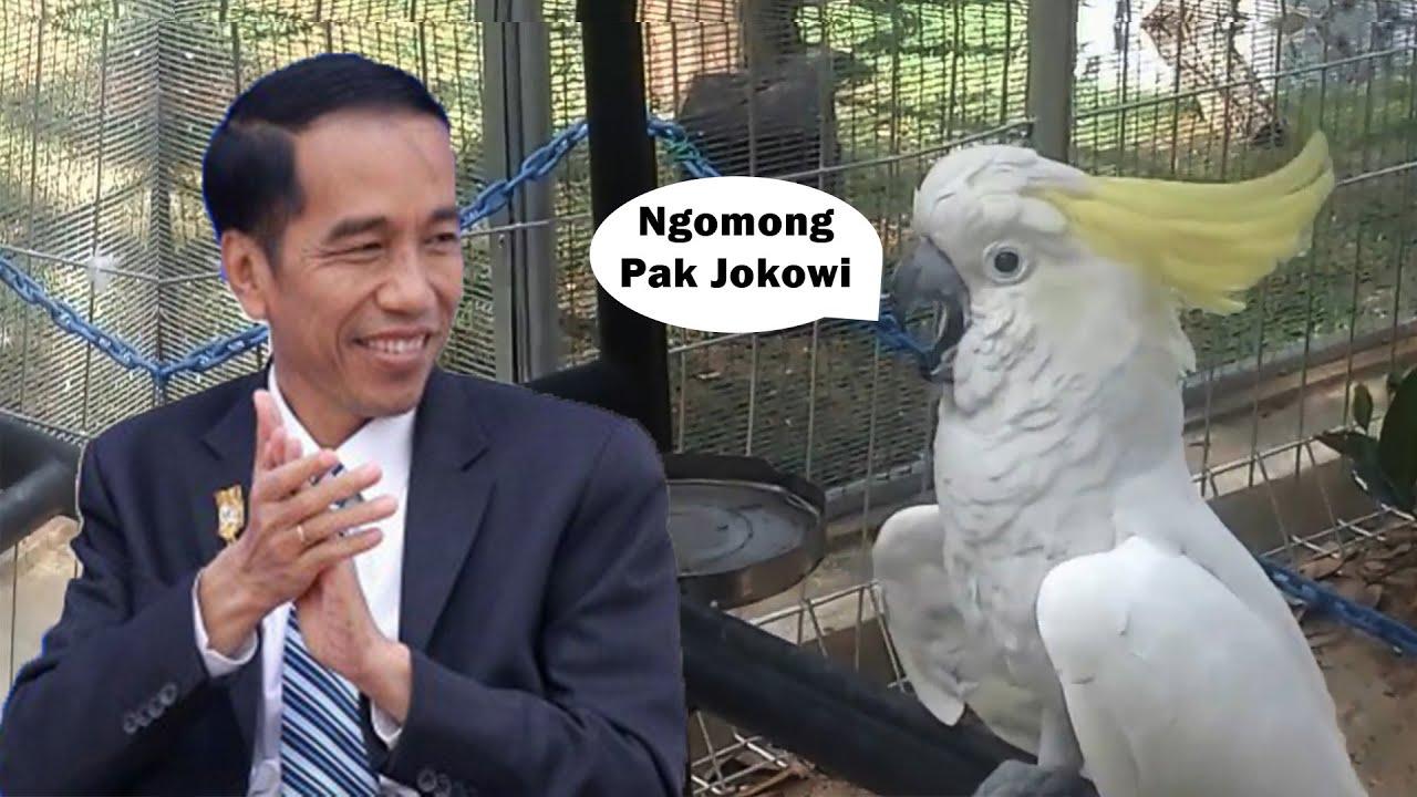 Hewan Pintar Bisa Nomong Jokowi Dan Naik Motor