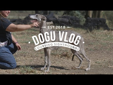 DOGU VLOG - LURE COURSING SIGHTHOUNDS