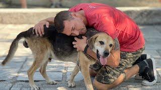 Helping Stray Dogs In Greece | Brandon McMillan