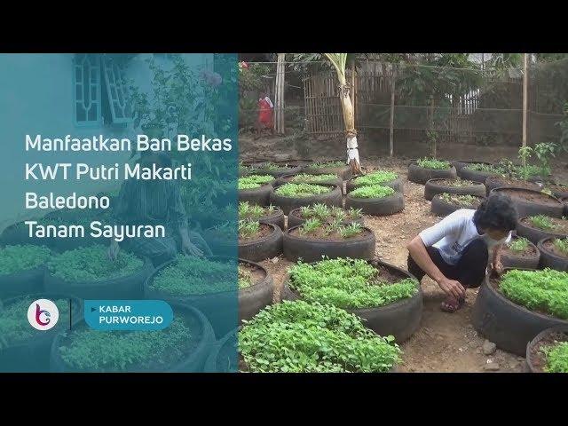 Manfaatkan Ban Bekas, KWT Putri Makarti Baledono Tanam Sayuran
