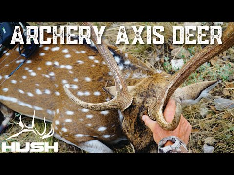 BOW HUNTING AXIS DEER IN TEXAS!