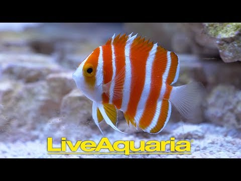 Personal Tour Of LiveAquaria With Kevin Kohen
