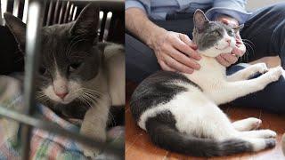 Street Cat Rescue: Little Bear