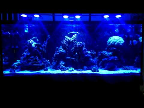 Barry's 220 gallons reef tank
