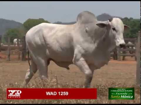 LOTE 11 - WAD 1259