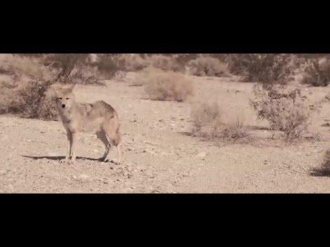 Darkside - A1 (Official Video)
