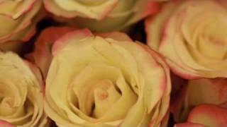 ミッシェル 出逢い 歌 フランソワーズ アルディ アルディ 検索動画 13