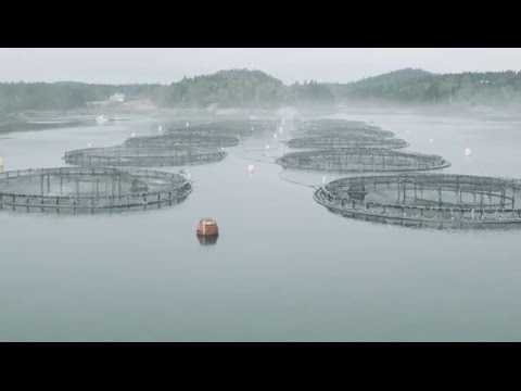 Lobster and aquaculture: Studying interactions on Canada's
