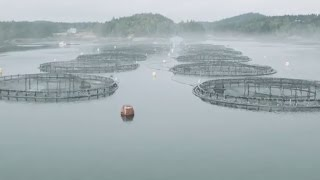 Lobster and aquaculture: Studying interactions on Canada's East Coast
