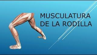 La el entre musculos tobillo y rodilla