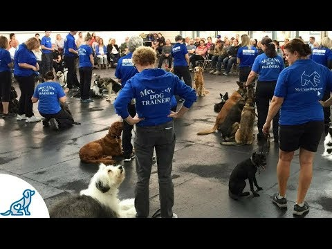 Live: Dog Training Entertainment Show