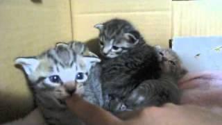 野良猫だったニャ〜さんに赤ちゃんが生まれました 一つの命を保護したら...