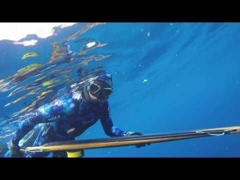 Spearfishing Yellowfin (Allison) Tuna. Hudson Canyon, Long Island, New York.
