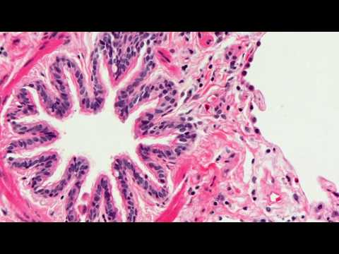 Introduction to Histopathology