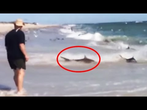 Rare Shark Feeding Frenzy In North Carolina Youtube