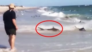 Rare Shark Feeding Frenzy in North Carolina