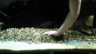 Земля для кактусов в аквариуме !