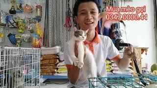 Bán Mèo Cảnh | Bảo Hành Sức Khỏe | Giao Mèo Miễn Phí TP.HCM