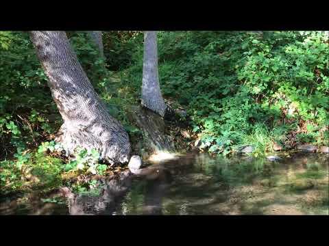 Beethoven Piano Trio in Bb 'Archduke', Op. 97- I. Allegro moderato