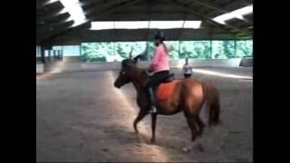Paardrijden bij