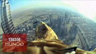 Suscríbete a bbc mundo http://vid.io/xqoxuna cámara colocada en el lomo de un águila captó su impresionante vuelo descenso desde rascacielos más alto d...