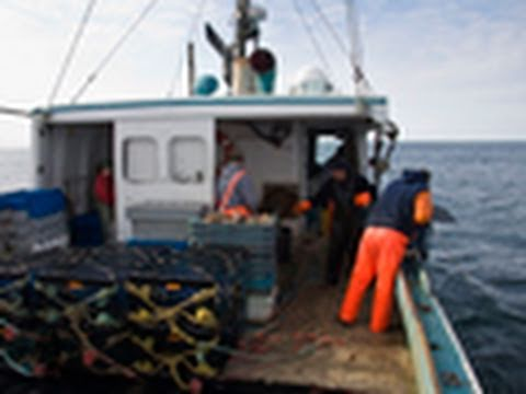 Lobster Fishery In Southwest Nova Scotia