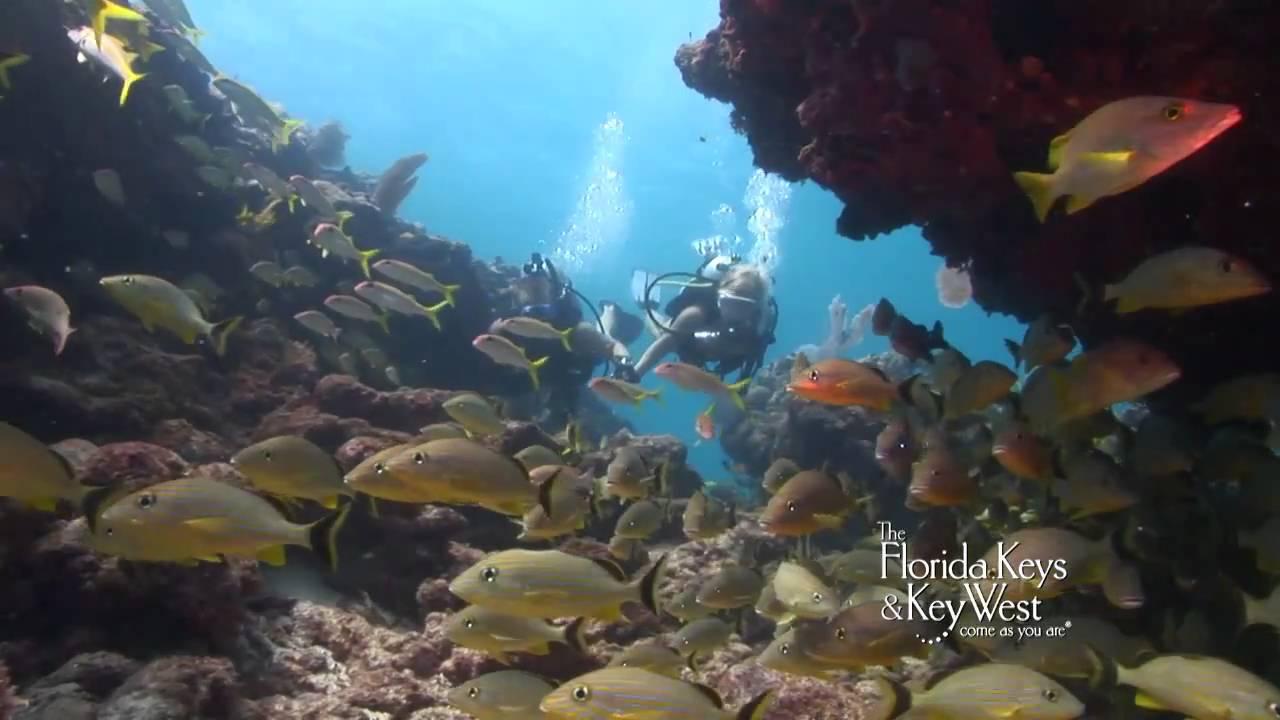 dive the florida keys  alligator reef