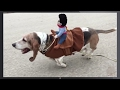 Funny Animals in Halloween Costumes Compilation! (BEST FUNNY ANIMAL COMPILATION)