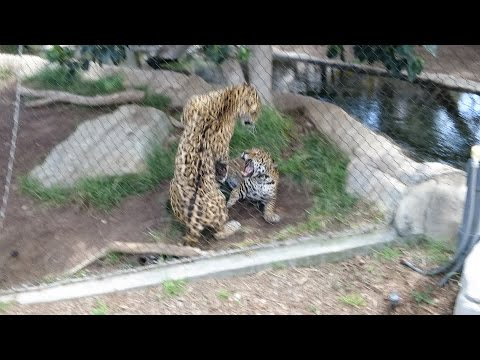 Animal Fight at the San Diego Zoo