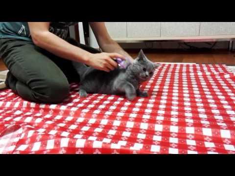 Furminator Kedi Tarağı