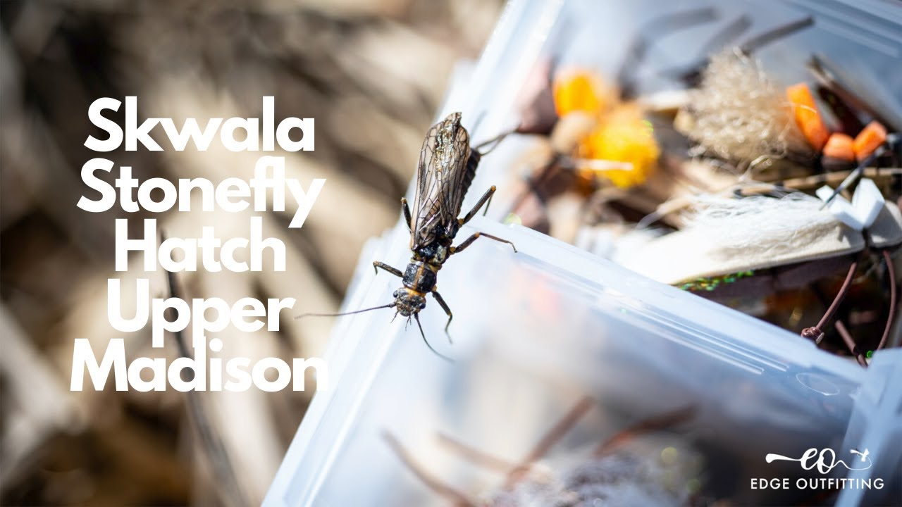 SKWALA Stonefly Hatch 2020