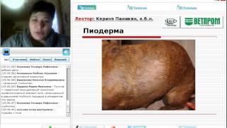 """Вебинар от компании """"Ветпром"""": «Пиодермау собак: причины, диагностика, лечение»"""