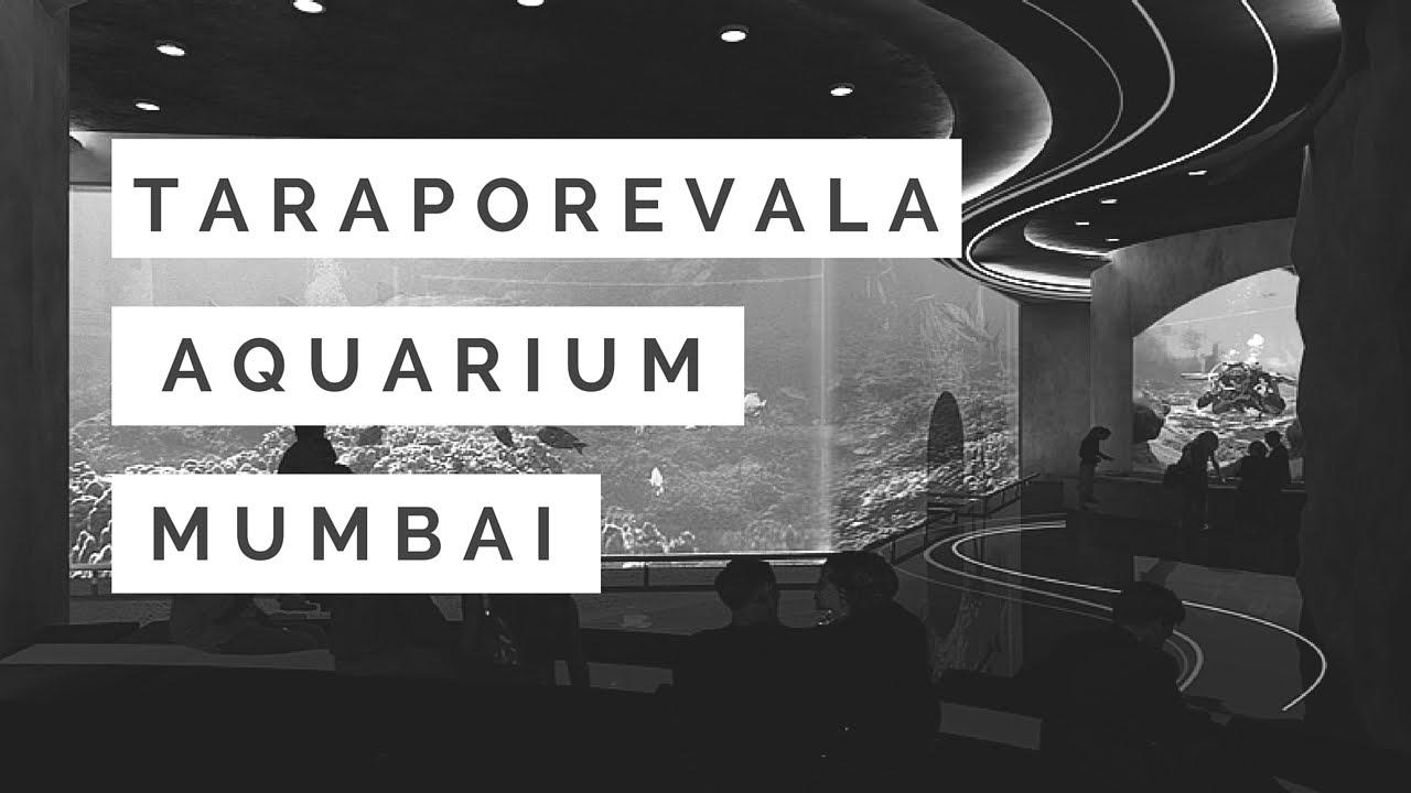 Fish aquarium tarapur - Taraporewala Aquarium Mumbai
