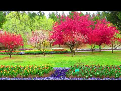 Tulip Top Garden Canberra